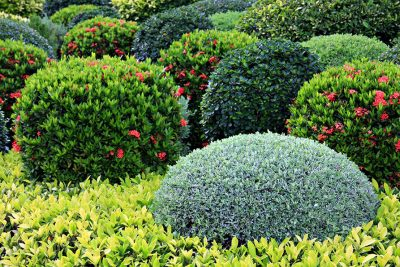Bushes and Shrub Care
