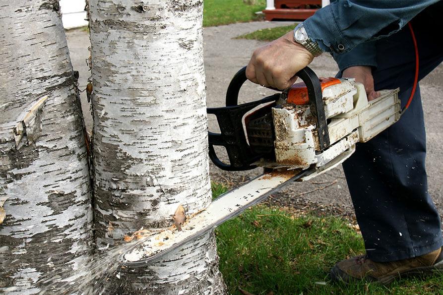 Tree Care Husdon